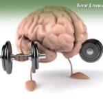 развитие мозга для взрослых и детей