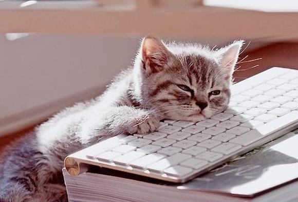 котенок лежит на клавиатуре
