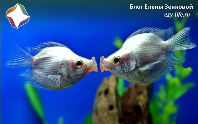 на каком свидании целоваться