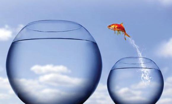 рыбка прыгает