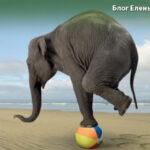 модель баланса жизни