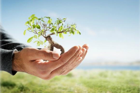 дерево в руке