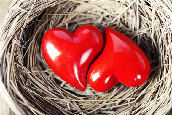 сердца в гнезде